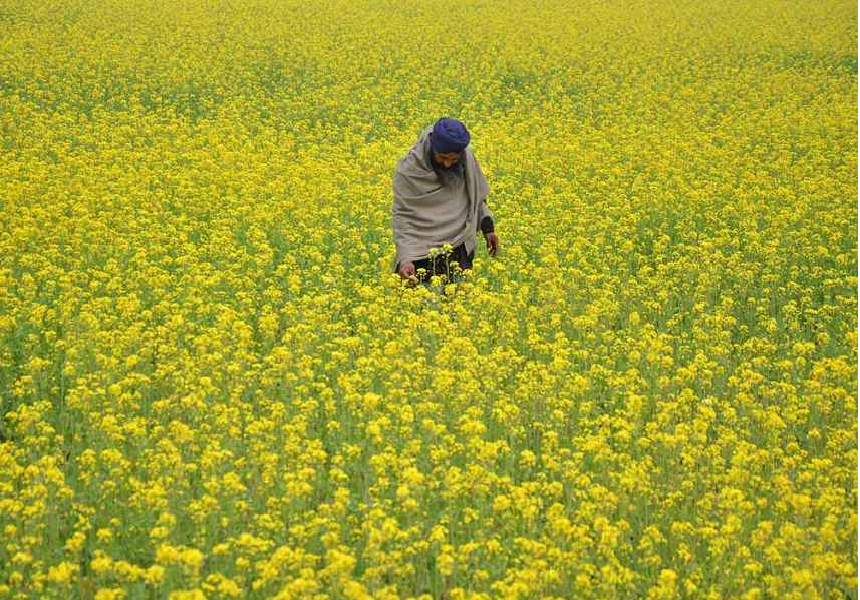 Crop-Production-in-Punjab.png