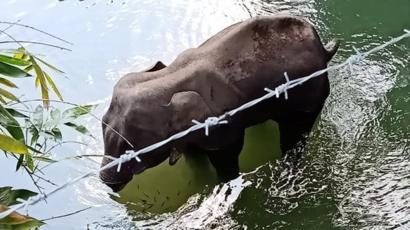 elefant-file-image.jpg